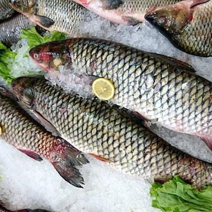 Frischer Fisch aus Wermsdorf in Sachsen